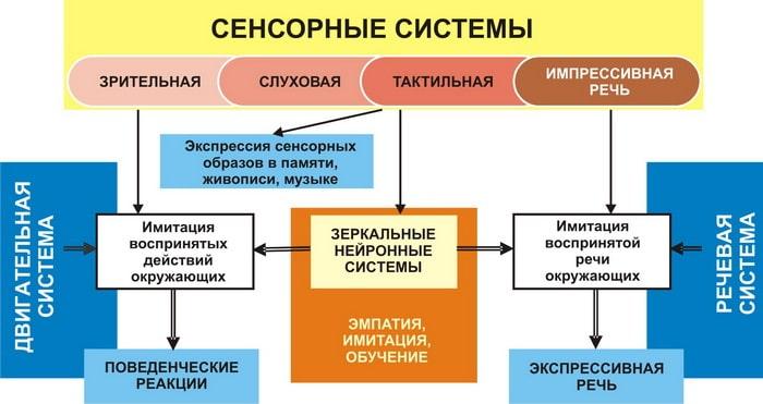 Сенсорные системы